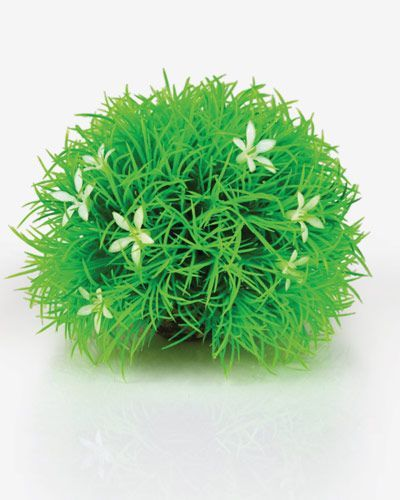 Biorb Topiary Ball with Daisy