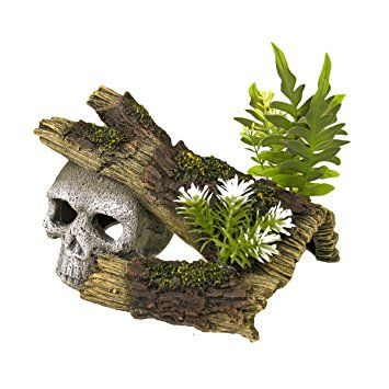 Blue Ribbon Skull With Log