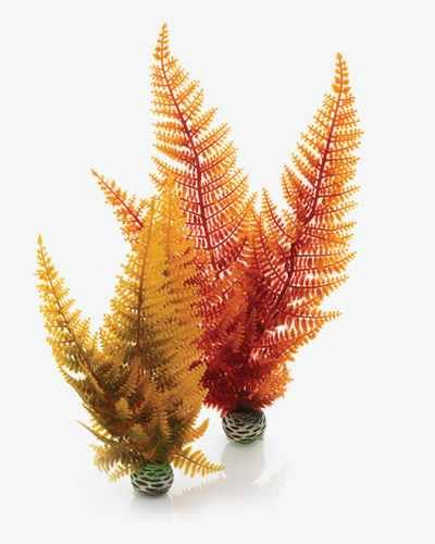 Biorb Plant Autumn Fern