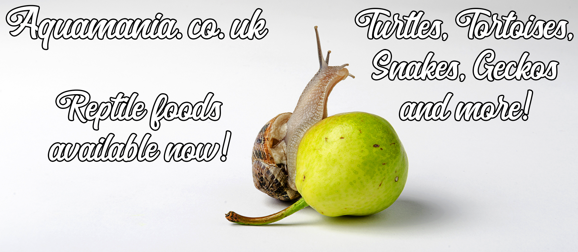 Snail eating apple reptile foods